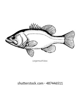 Largemouth Bass Images Stock Photos Vectors Shutterstock