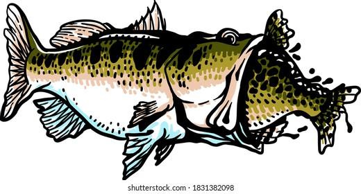 Largemouth Bass Swallowed Crappie Fish Vector Illustration