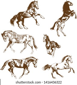 The lateral image of a wild horse mustang in the style of art drawing graphics