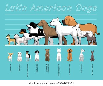 Latin American Dogs Size Comparison Set Cartoon Vector Illustration