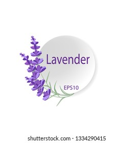 Lavender background with copy space for your text. Flower logo card. Mockup for design. Vector eps10.