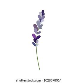 lavender doodle illustration