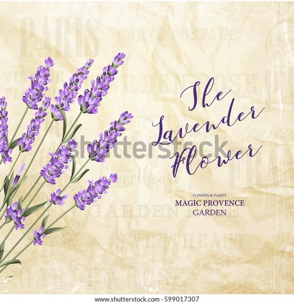 The lavender elegant card. Vintage postcard background vector template for wedding invitation. Label with lavender flowers. Vector illustration.