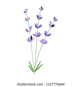 Lavender flower. Vector packaging design template and emblem - beauty and cosmetic oil - lavender