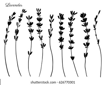 Lavender flowers hand drawn doodle vector black silhouette isolated on white, herbal vintage graphic collection, design for package tea, natural organic product, medicine, cosmetics, greeting card