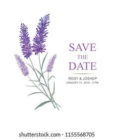 Lavender flowers watercolor elements. Collection of floral and leaves on a white background. Drawing watercolor design for save the date, invitation, wedding or greeting cards and brush vector.