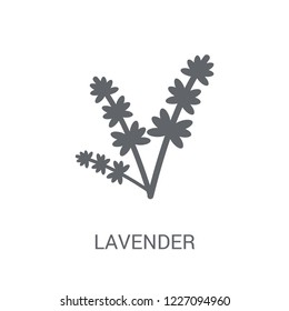 Lavender icon. Trendy Lavender logo concept on white background from Nature collection. Suitable for use on web apps, mobile apps and print media.