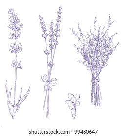 lavender pencil drawing vector set