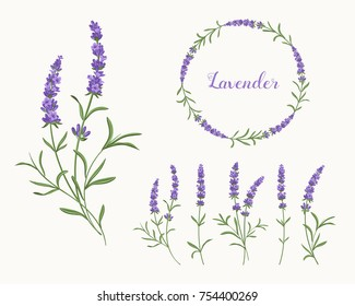 Lavender set. Separate flowers, small bouquets and a wreath