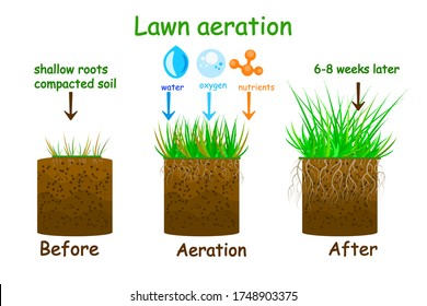 Lawn aeration stage illustration. Before and after aeration. Gardening grass lawn care, landscaping, lawn grass care service. Illustration for article, infographics or instruction. Stock vector