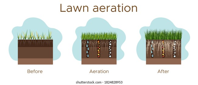 Lawn care - aeration and scarification. Labels by stage-before, during, and after. Intake of substances-water, oxygen, and nutrients to feed the grass and soil. Vector flat illustration - horizontal.