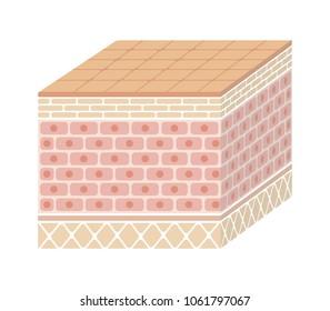Layer of human skin illustration ( no text)