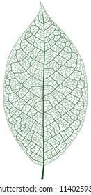 Layered Vector Illustration Of Leaf Vein.