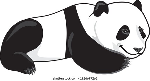 Lazy smiling panda isolated on white. Vector