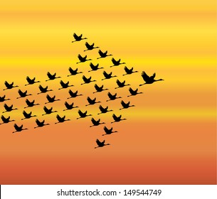 Leadership and Synergy Concept Illustration : A number of Swans flying against a Bright White sky background lead by a big dark leader swan