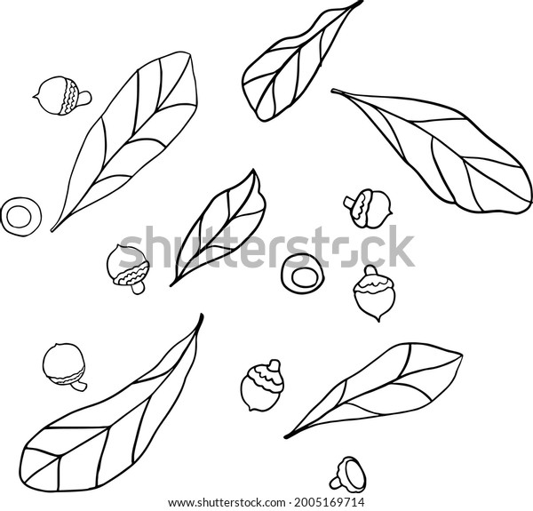 Leaf and Acorn Vector Set