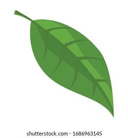 Leaf avocado vector icon.Cartoon vector logo isolated on white background leaff avocado.