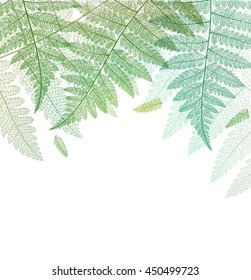 Leaf background. Fern leaves green botanical card. Vector abstract skeleton illustration on white.