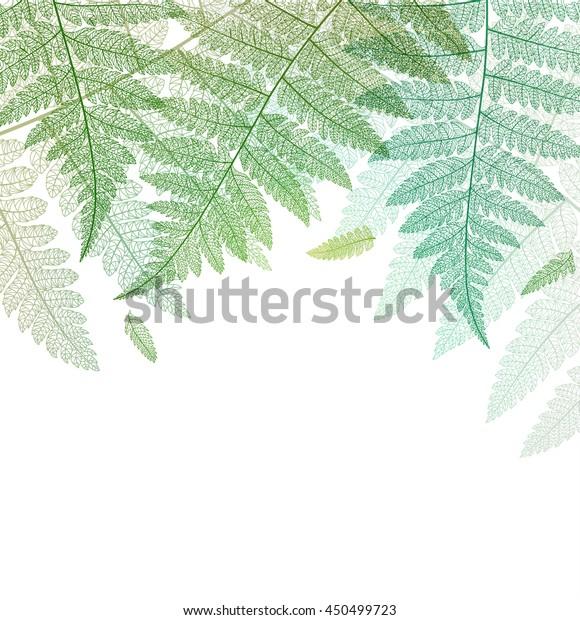 Leaf background. Fern leaves green botanical card. Vector abstract skeleton illustration on white.