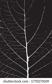 Leaf close up leaf texture black or white color background vector texture.