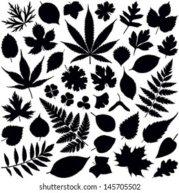 Leaf collection - vector silhouette