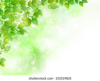 Leaf fresh green background