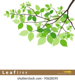 Leaf green tree vector illustration