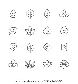 Leaf icon line icon thin icons