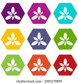 Leaf icons 9 set coloful isolated on white for web