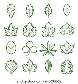 Leaf icons. Collection of green linear symbols of leaves, such as maple, fig-leaf, oak, grape, clover, hemp, chestnut, etc. Vector illustration. Editable stroke
