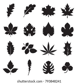 Leaf icons. Collectionf of 16 black symbols of leaves, such plants as oak, maple, chestnut, grapes, fig, hemp, holly, dandelion, clover, palm, etc. isolated on a white background. Vector illustration