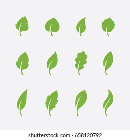 Leaf icons set isolated on white background. Green leaves of various shapes for natural, eco or bio product logo or label design.