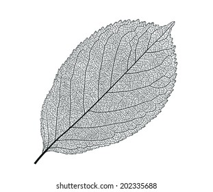 Leaf isolated detailed vector illustration