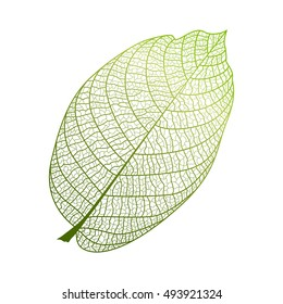 Leaf isolated. Vector illustration. EPS 10