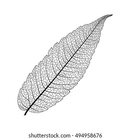Leaf isolated. Vector illustration. EPS 10