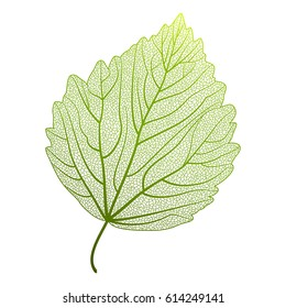 Leaf isolated.Vector illustration
