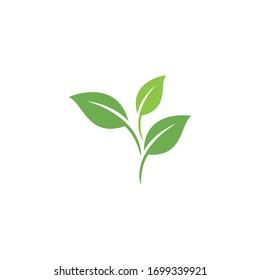 Leaf Logo Template vector symbol nature