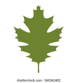 leaf logo vector.
