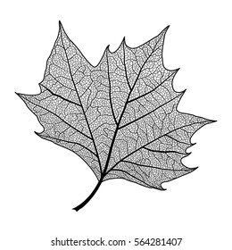 Leaf maple, isolated. Vector illustration .EPS 10