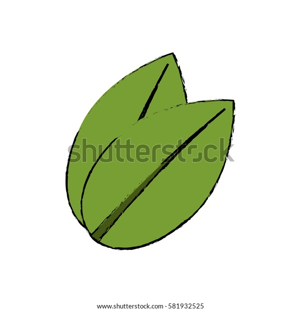 Leaf natural ecology icon vector illustration graphic design