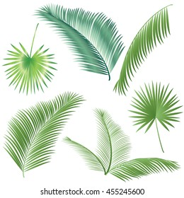 Leaf palm tree isolated on white background. Tropical tree leaves set. Palm tree branch, hand palm, Palm leaf pattern, Palm beach leaf, palm oil isolated, tree date, Exotic palm vector. Sukkot. Summer