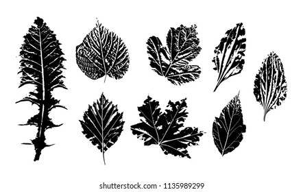 Leaf prints, ink silhouettes on a white background. Botanical herbarium from dried plants. Lipa, maple, dandelion, hawthorn, plantain, turf. Vector illustration.