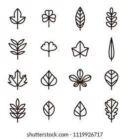 Leaf Signs Black Thin Line Icon Set Include of Maple, Clover, Oak and Birch. Vector illustration of Icons
