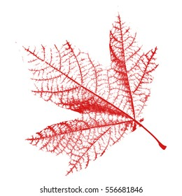 Leaf texture isolated. Distress natural background red color. Empty design template. EPS10 vector.