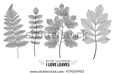 Leaf vector set. Botanical leaves branch set on white background.