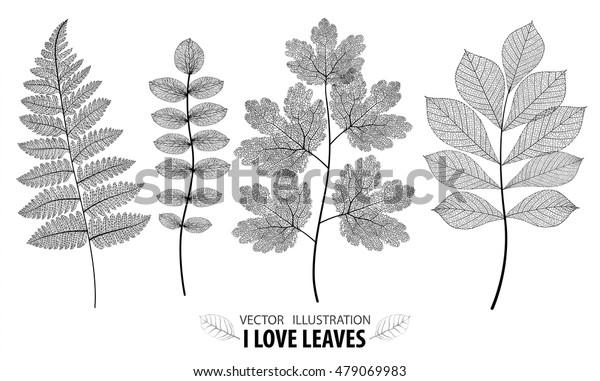 Leaf vector set. Botanical leaves branch set on white background.