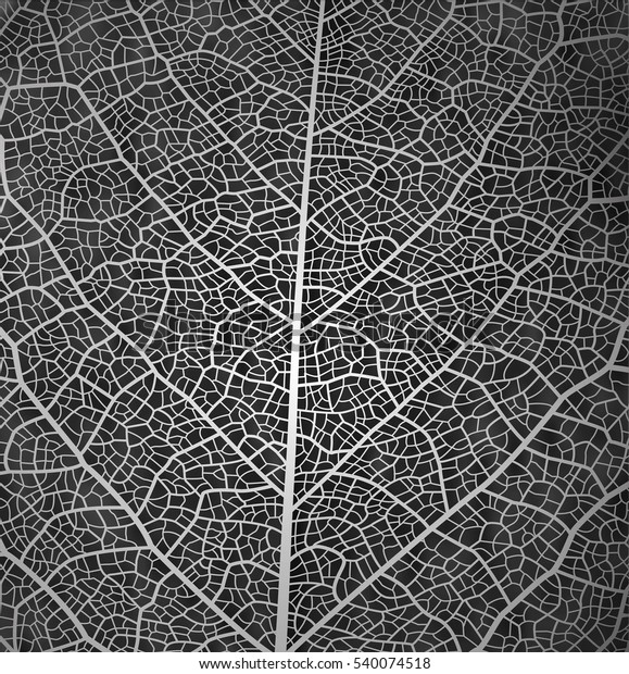 Leaf vector texture pattern background. Black and white design