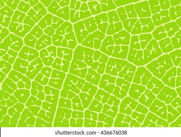 Leaf vector vein structure. Nature texture.