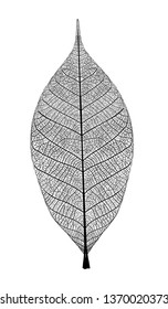leaf with veined on white background, vector graphic monochrome illustration