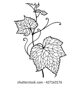 Leaf vine. Zen tangle doodle floral ornament. Hand drawn  illustration for adult coloring books in vector. Unique lacy.